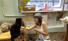 Необычные кафе Красноярска: играем с кошками и смотрим фильмы