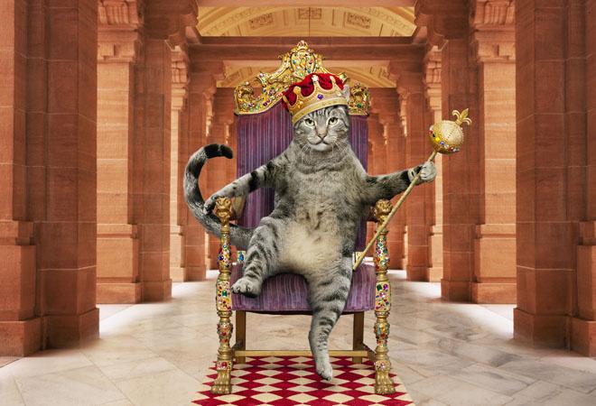 Кошка кот коты фото