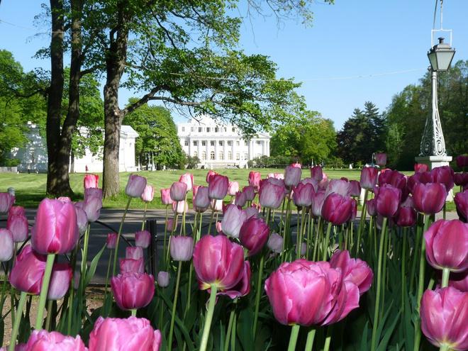 Фестиваль тюльпанов в ЦПКиО