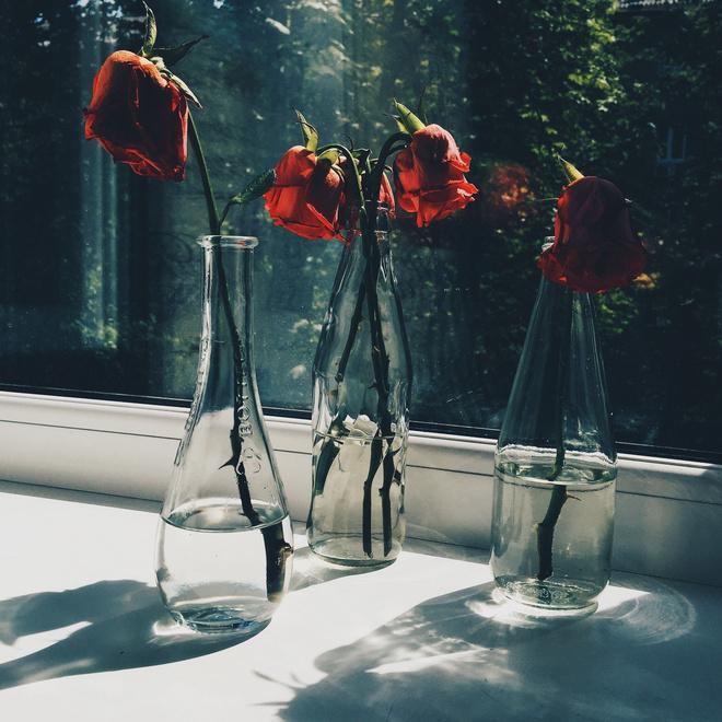 Розы быстро вянут