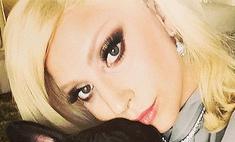 Леди Гага стала собачьим дизайнером