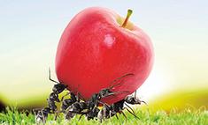 Найти и уничтожить: способы борьбы с садовыми вредителями