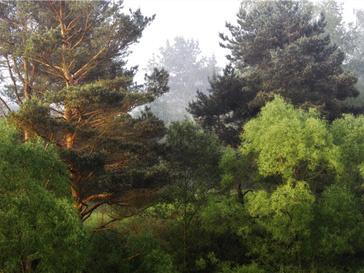 Химкинский лес - яблоко раздора