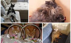 Самые прикольные коты июня. Выбери лучшего!