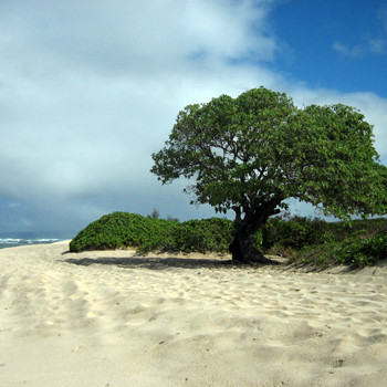 Пляж Мокулея мелькал на телеэкранах не только в первом, но также во втором и третьем сезонах телесериала.