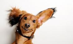 Страшно смешно: как кошки и собаки смотрят фильмы ужасов