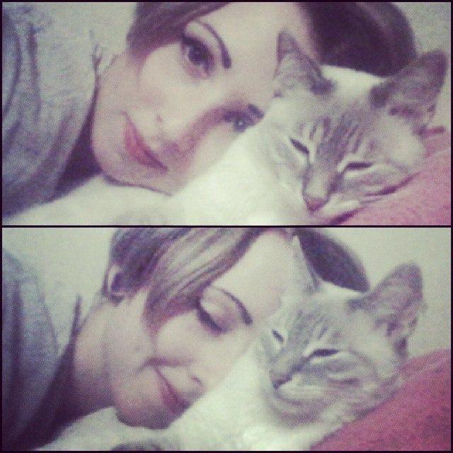 красивые коты и кошки