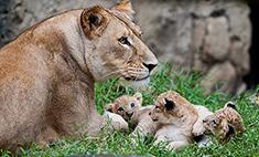 Все в мать! Мамы с дочками и сыночками – 35 милых деток