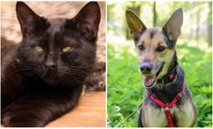 котопёс недели кот байкал собака гайка ищут дом