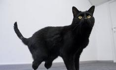 Появился первый в мире бионический кот