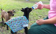 «Роев ручей»: 7 экспериментов красноярского зоопарка