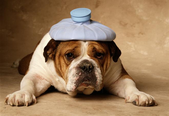 инсульт у собаки