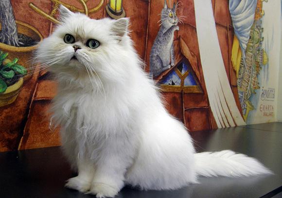 Ночь музеев 2015 в Республике кошек