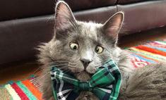 косоглазый кот беларус новая звезда инстаграма