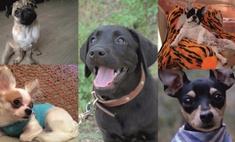 Пушистые друзья: 16 милых собачек Оренбурга