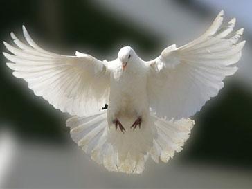 Почтовые голуби быстрее интернета
