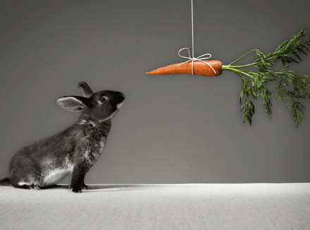 Заяц и морковка