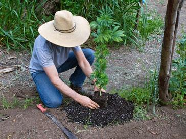 Пенсионерок из Калифорнии посадили за решетку за выращивание марихуаны