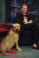 Райан Гослинг с псом