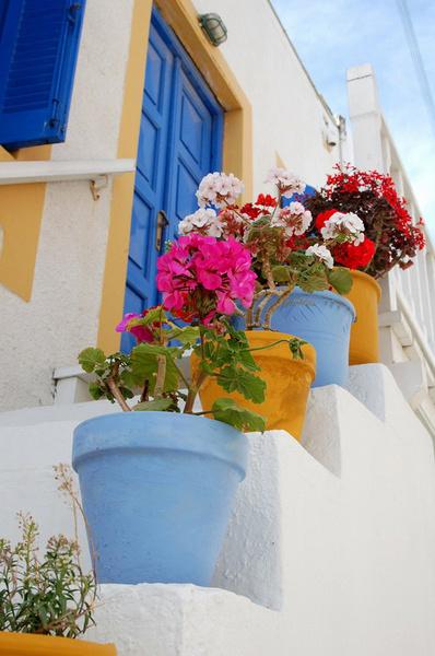 Во многих странах вазонами с садовой геранью украшают дворики и балконы.