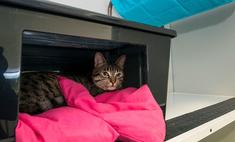 Где можно оставить кошку на время отпуска?
