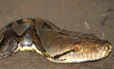 Итальянка нашла в туалете змею