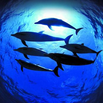 Подводные съемки велись знаменитой командой на расстоянии «вытянутой руки» и проходили в 15 морях и трех океанах.