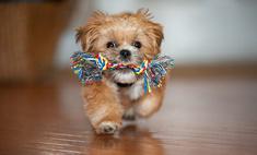 Если в доме собака: все, что нужно знать о содержании питомца