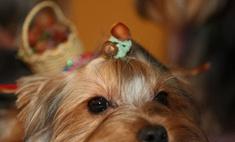 Столичные власти позаботятся о домашних животных