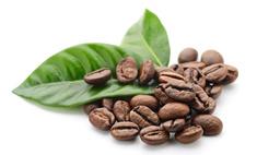 Выращивание и уход за кофейным деревом в домашних условиях