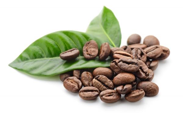 Где купить кофейное дерево?