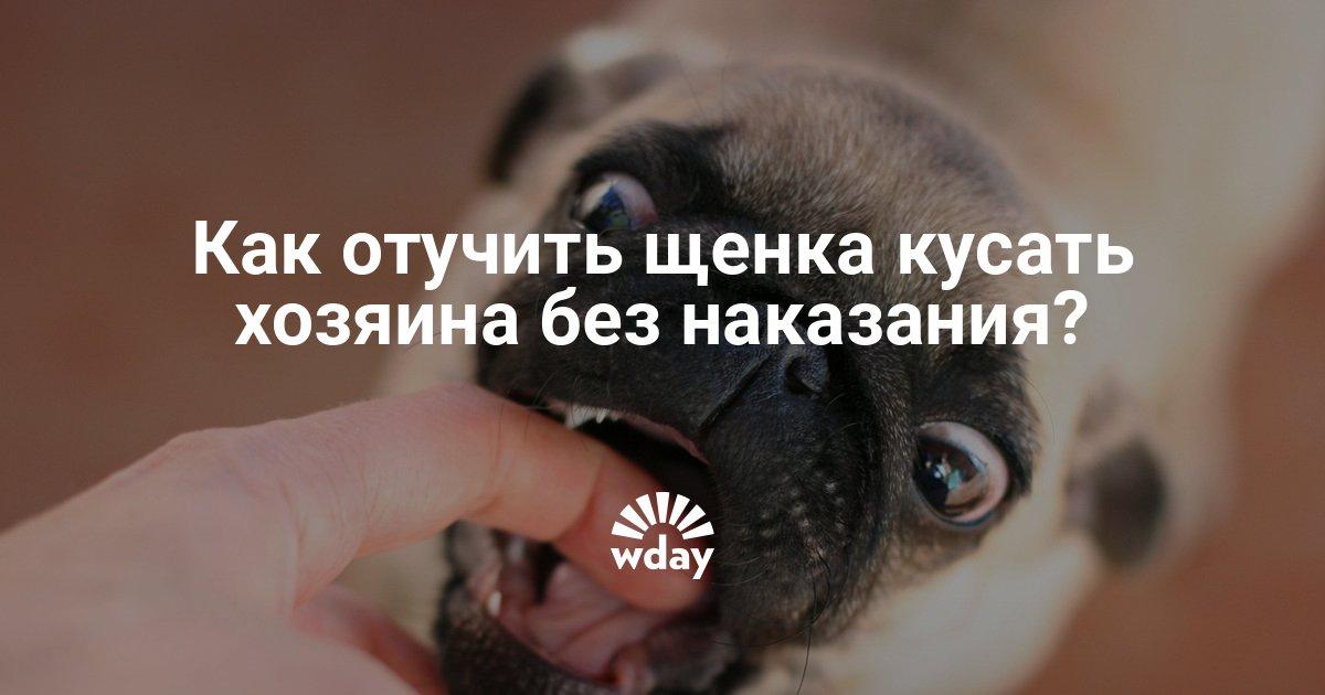 Почему щенок обхватывает у хозяина ногу имитируя собачий секс