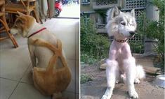 удивительно неудачных стрижек домашних животных галерея