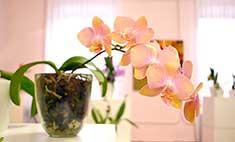 Осенний вальс: выставка комнатных цветов в Иркутске