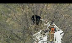Черный медведь спровоцировал пробки на хайвее в США