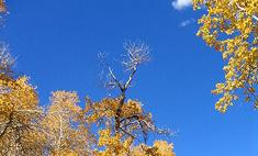 9 самых старых деревьев планеты
