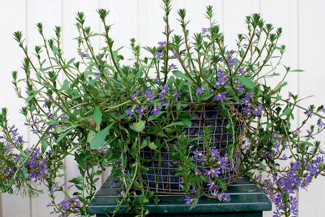 Горшки удобны — отцветшее растение легко заменить на другое.