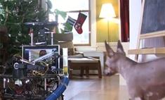 Создан робот для игры с домашними питомцами