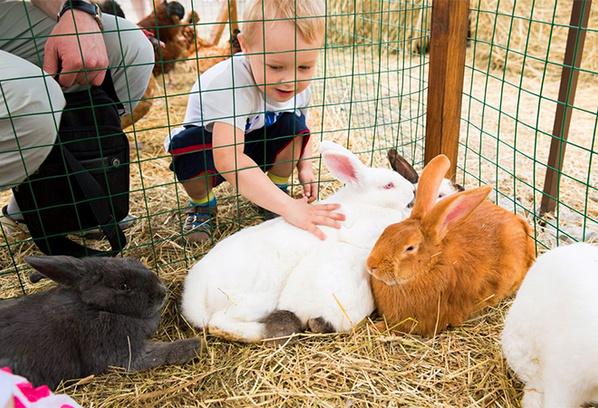 Дети придут в восторг от мини-фермы