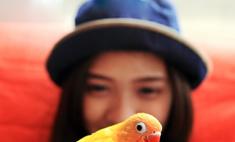 Попугай: как воспитать собеседника