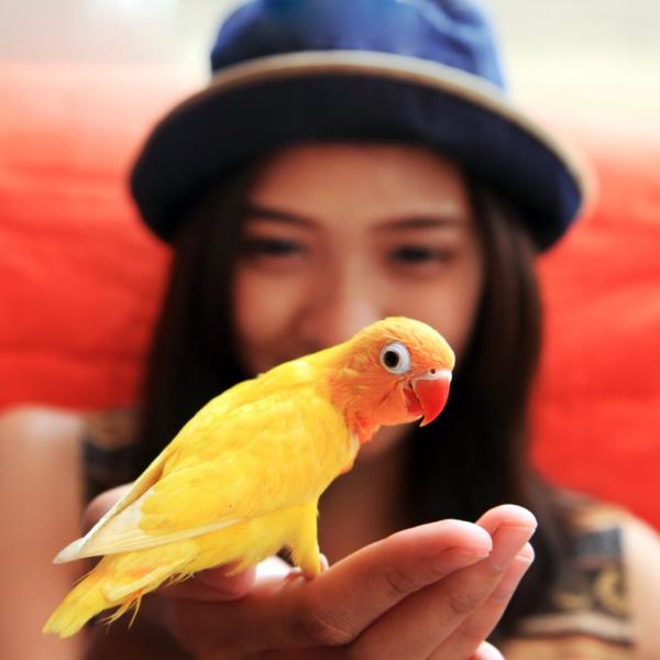 Разговаривающие попугаи