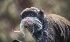 Если бы у зверей был «Инстаграм»: 20 блогеров из зоопарка
