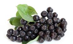 Польза и вред черноплодной рябины (аронии)