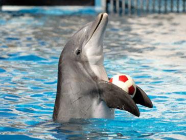 Люди и дельфины научились обмениваться сообщениями между собой