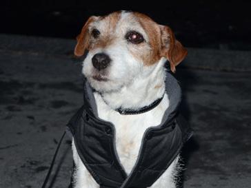 Пес Угги
