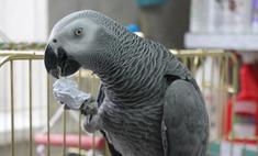 В новосибирском магазине поселился говорящий попугай