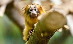 Китайский Новый год: выбери обезьянку на удачу