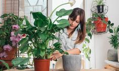 15 комнатных растений, которым не нужен свет