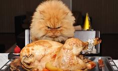 Опасная еда: как нельзя кормить кошку. Советы ветеринара
