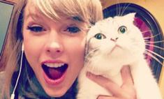 Скажите «мяу»: звезды и их котики в соцсетях